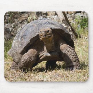 Mousepad Tartaruga gigante curiosa | Galápagos