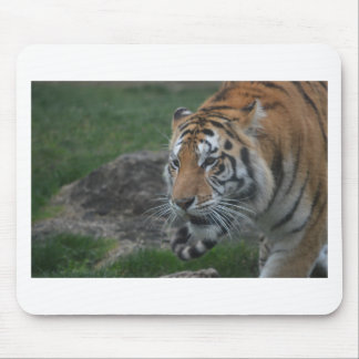 Mousepad tigre