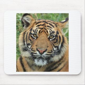 Mousepad Tigre adulto