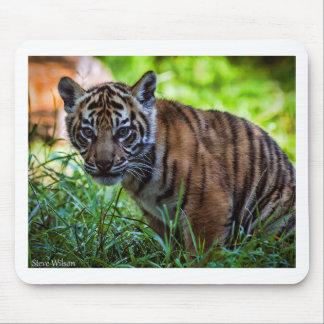Mousepad Tigre Cub de Sumatran dos alugueres