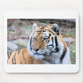 Mousepad Tigre de Bengal real estóico dos alugueres