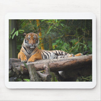 Mousepad Tigre do Malay dos alugueres que Lounging no
