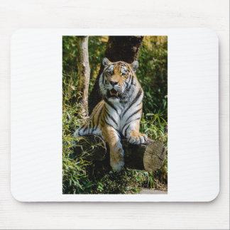 Mousepad Tigre dos alugueres em Muenster