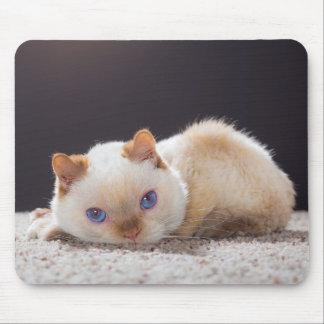 Mousepad Trident o tapete do rato 01 do gato