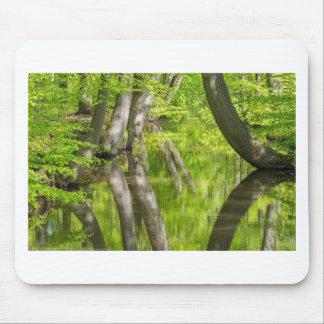Mousepad Troncos de árvore da faia com água na floresta do