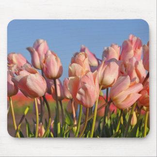 Mousepad Tulipas cor-de-rosa do primavera