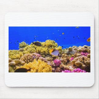 Mousepad Um recife de corais no Mar Vermelho perto de