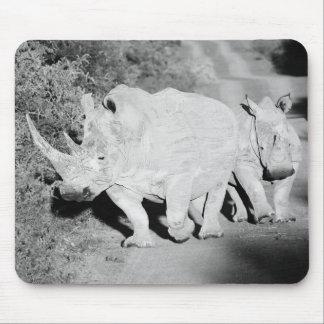 Mousepad Uma mãe do rinoceronte e sua vitela em África do