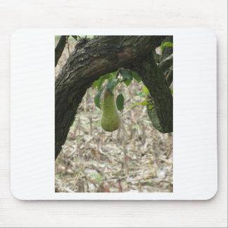 Mousepad Única pera verde que pendura na árvore