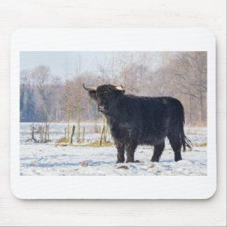 Mousepad Vaca escocesa preta do escocês na neve do inverno