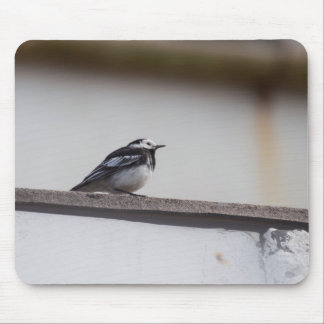 Mousepad Wagtail Pied
