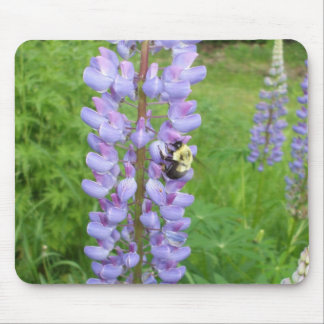 Mousepad Zangão em uma flor do Lupine