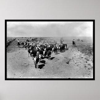 Movimentação do gado de Texas Pôsteres