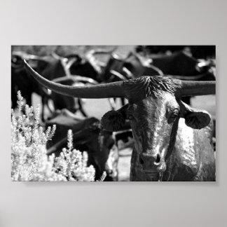 Movimentação do gado pôsteres