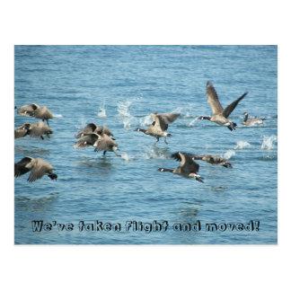 Mudança da foto dos gansos do vôo de endereço cartão postal