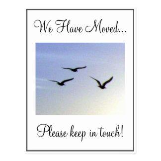 Mudança de pássaros de vôo do cartão de endereço cartão postal