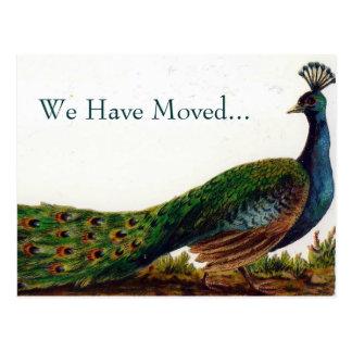 Mudança do pavão do vintage de cartão de endereço cartão postal