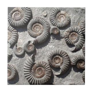 Multi amonites fósseis do Lias mais baixo