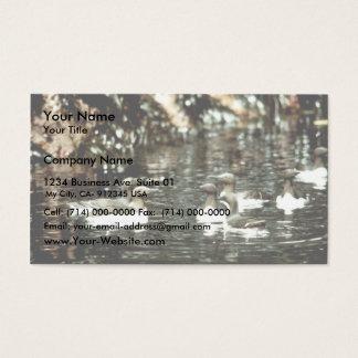 Murves comum cartão de visitas