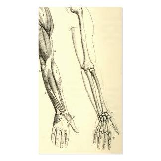 Músculos da anatomia | do vintage e ossos do braço cartão de visita