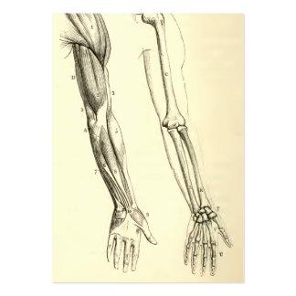 Músculos da anatomia | do vintage e ossos do braço cartão de visita grande
