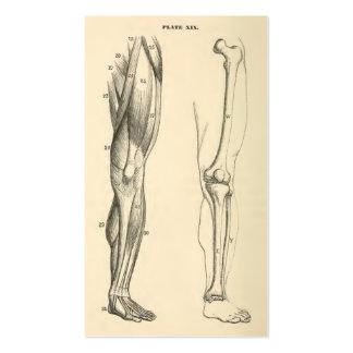 Músculos da anatomia |   do vintage e ossos do pé cartão de visita