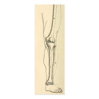 Músculos da anatomia |   do vintage e ossos do pé cartão de visita skinny