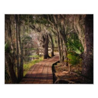 Musgo espanhol e pântanos de Louisiana Impressão Fotográfica