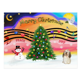 Música 2 do Natal - Havanese 2 Cartão Postal