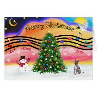 Música do Natal - Terrier calvo americano - Cartoes