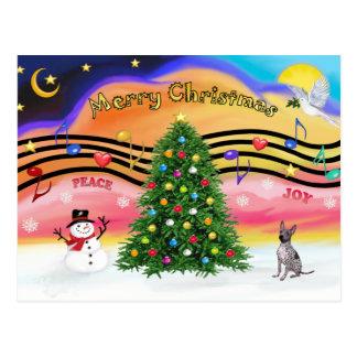 Música do Natal - Terrier calvo americano - Cartão Postal