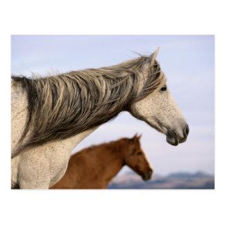 Mustang espanhóis cartoes postais