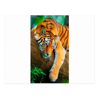My-Galaxy-Note2-Wallpaper-HD-Animals%20 (128) .jpg Cartão Postal