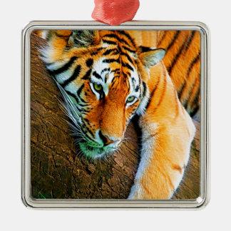 My-Galaxy-Note2-Wallpaper-HD-Animals%20 (128) .jpg Ornamento Quadrado Cor Prata