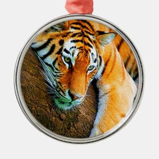 My-Galaxy-Note2-Wallpaper-HD-Animals%20 (128) .jpg Ornamento Redondo Cor Prata