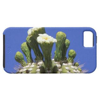 N.A., EUA, arizona, Tucson, deserto 2 do Sonora Capas Para iPhone 5