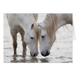 Na água no cartão do cavalo de alvorecer