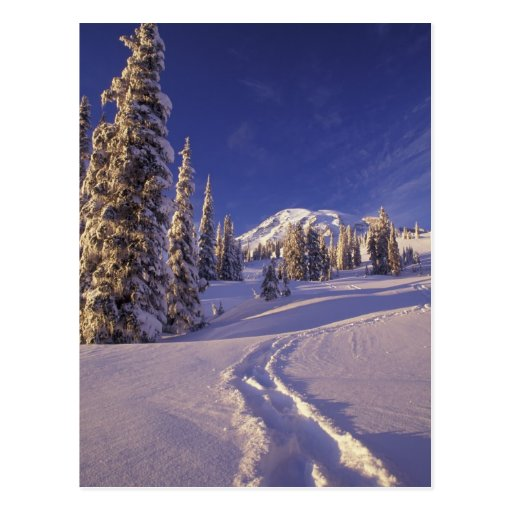 NA, EUA, Washington, o Monte Rainier NP, sapato de Cartao Postal