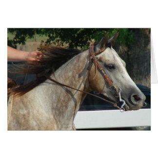 Na mostra do cavalo cartoes