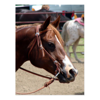 Na mostra do cavalo cartão postal