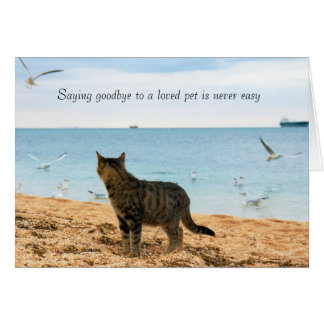 Na simpatia para a morte do gato cartão