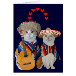 Namorados espanhóis do gato engraçado para o cartão comemorativo