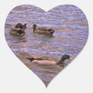 Namoricos emplumados adesivo coração