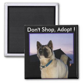 Não comprar, não adote! Ímã de Akita Ímã Quadrado