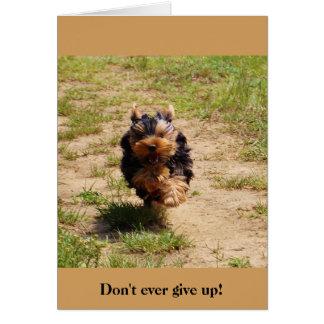 Não dê nunca acima! cartão