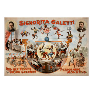Não meus macacos não meu poster vintage do circo