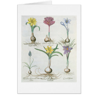 Narciso, açafrões e jacinto: autum 1.Narcissus Cartão