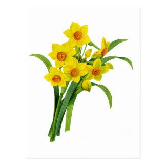 Narciso amarelo por Pierre Joseph Redoute Cartão Postal