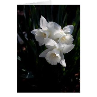 Narciso branco cartão de nota