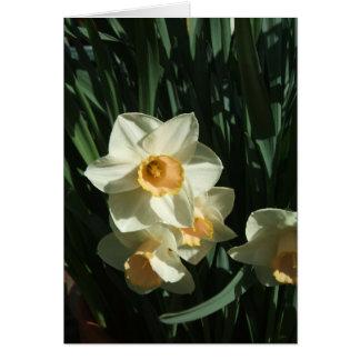 Narciso Cartão Comemorativo